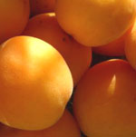 TherapyGarden™ Apricot Kernel Oil