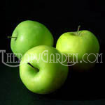 Fragrance Oil Fresh Cut Apples