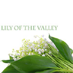 Fragrance Oil Lily of the Valley