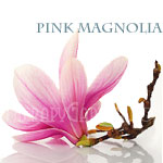 Fragrance Oil Pink Magnolia