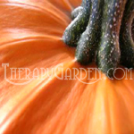 Fragrance Oil Spiced Pumpkin