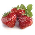 TherapyGarden™ Lip Balm Flavor Oil Strawberry
